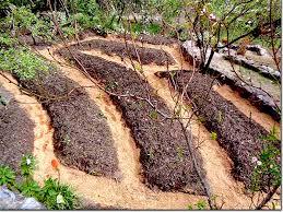 kitchen garden contour beds in the sacred valley peru