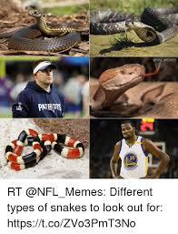 memes 35 arri rt different types of snakes to look out for