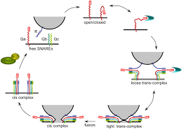 snares cogs and coordinators in signaling and development plant