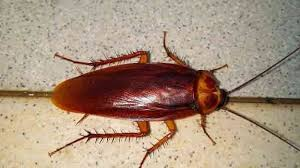 rid cockroaches 10 roach control products