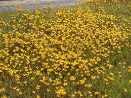 Fall Garden Plants Texas - october gardening tips east texas gardening