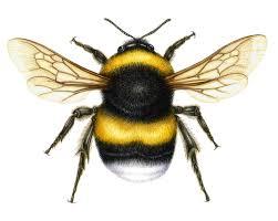 bumble bee illustrations free download clip art free clip art