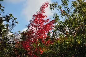 upper peninsula michigan fall color tours
