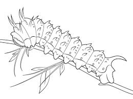 hubbards silkmoth caterpillar coloring free printable