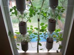 desperate gardener 2011