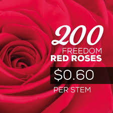 roses for sale wedding roses pack premium quality ecuadorian roses
