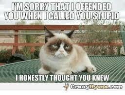 Angry Cat Memes - 25 best memes about grumpy cat grumpy cat memes