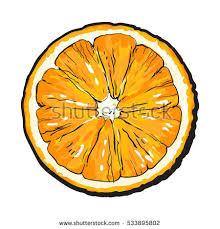 orange cut half top view sketch stock vector 533895802 shutterstock