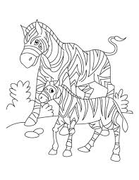 zebra coloring pages without stripes coloringstar
