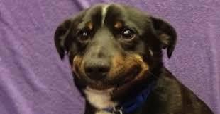 Nervous Meme - nervous dog blank template imgflip