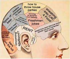 the brain anatomy of cu freshmen sophomores juniors and