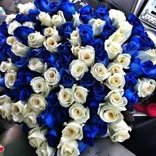 white and blue roses blue and white roses pictures photos and images for