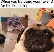 Funny Pug Memes - funny pug dog meme lol pinteres