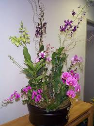 Best Indoor Plants For Oxygen by Indoor Plants Exotic Plants