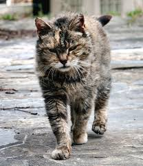 farm cat wikipedia