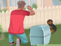 belgian shepherd how to train how to train german shorthaired pointers 12 steps with pictures
