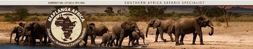 african safari animals african safari maplanga co za