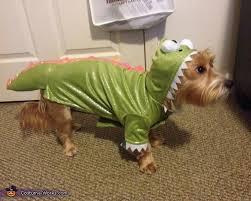 Yorkie Costumes Halloween 133 Pet Dog U0026 Cat Costumes Images Animals