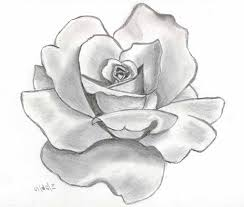 3d pencil drawings of roses 3d rose drawing pictures how to draw a