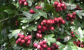 five of the best trees for gardens large or small garden