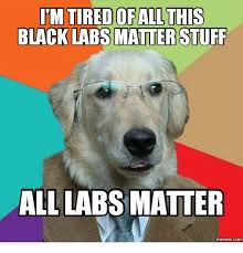 Black Lab Meme - imtiredofall this black labs matter stuff all labs matter com