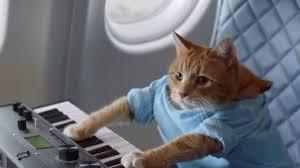 Keyboard Cat Meme - delta airline s funny keyboard cat flight safety meme video