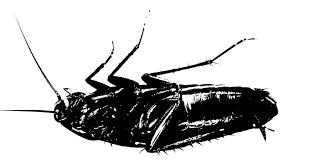 monsters modernity metamorphosis 100 u2014 red wedge