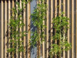 landschaftsgärtner immergrün zäune u0026 sichtschutz