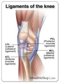 Knee Anatomy Pics Best 25 Ligament Tear In Knee Ideas On Pinterest Knee Pain