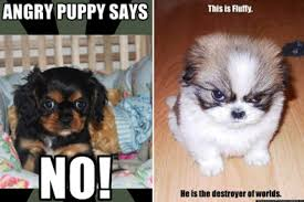 Cute Puppy Memes - photos cutest angry puppy meme contest huffpost