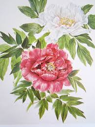 Peony Flowers by