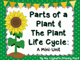 parts of a plant u0026 the plant life cycle learning at the primary pond