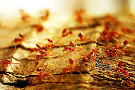 8 steps to prepare for pest ant control service