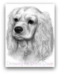 how to draw fur drawing tutorials u0026 how to draw animals u0027 fur