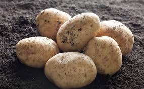 potato starch cargill and akv langholt plan 22 5m potato starch site