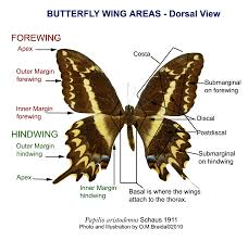 butterfly wing labels http myartteacher com wp content