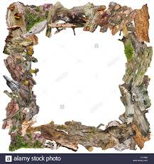 halloween frame halloween square photo frame made of ugly terrible dead bark and