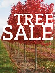 tree sale modern homestead