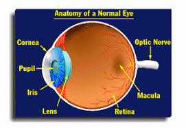 Does Macular Degeneration Always Lead To Blindness What Is Macular Degeneration Amdf
