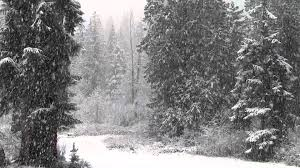 Photos Of Snow Fast Falling Snow 1080p Hd Without Music Youtube