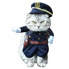 Halloween Costumes Cars 22 Cat Costumes Halloween 2017 Hilarious Costumes Cats