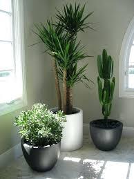 decor plants home home plants decor home decor plants name sintowin