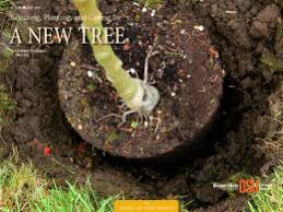 selecting planting and caring for a new tree osu extension