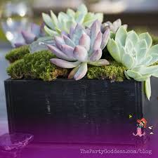 succulent centerpieces diy succulent centerpieces be your own florist