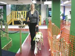Pictures Of Blind Dogs Life As A Human U2013 When Did Guide Dogs For The Blind Begin
