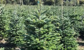 newbury tree farm reading groupon