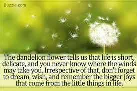 what does a dandelion really symbolize dandelions