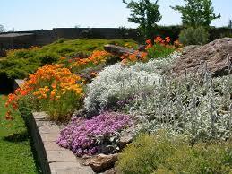 giardini rocciosi in ombra giardino roccioso il potatore