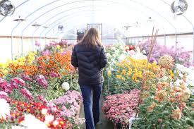 Cut Flower Garden by Chrysanthemums Rediscovered Floret Flowers
