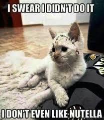 Mad Mom Meme - cat meme mad mom meme best of the funny meme